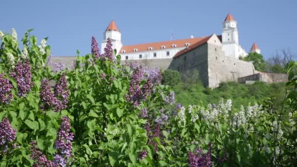 Kvetoucí šeříky proti středověkého hradu v Bratislavě