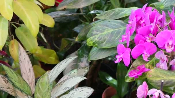 Blooming tropical orchids and other plants