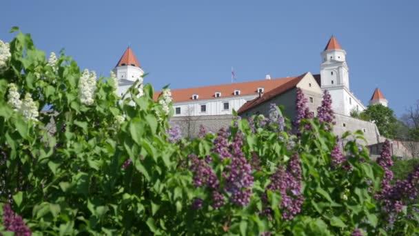 Kvetoucí šeříky pozadí středověkého hradu v Bratislavě