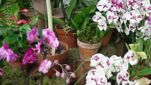 Kvetoucí tropické orchideje a jiné rostliny