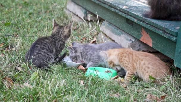 Kittens eating  forage