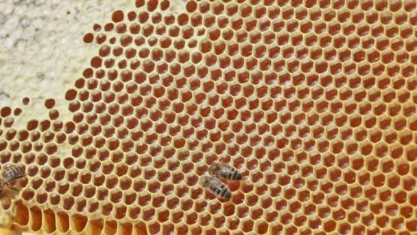 včela voštiny