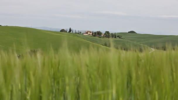 Zelená tráva v popředí