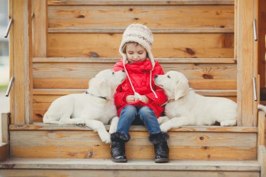 A little girl with two puppy Golden Retriever.