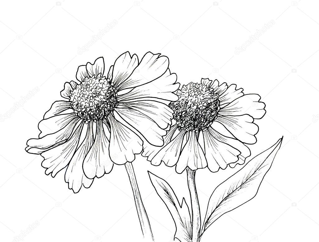 Romantic background with three echinaceas.