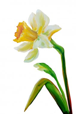 Narcissus oil painting.