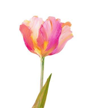 Vintage pink tulip.