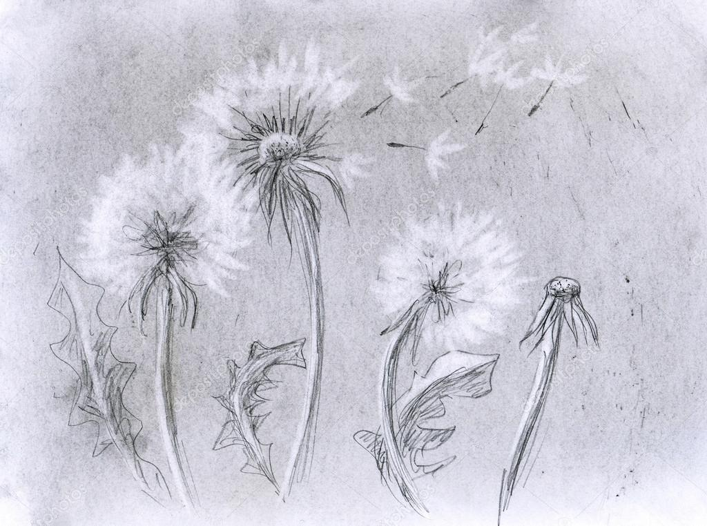 Dandelion pencil artwork