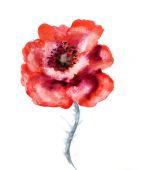 Akvarel květ máku