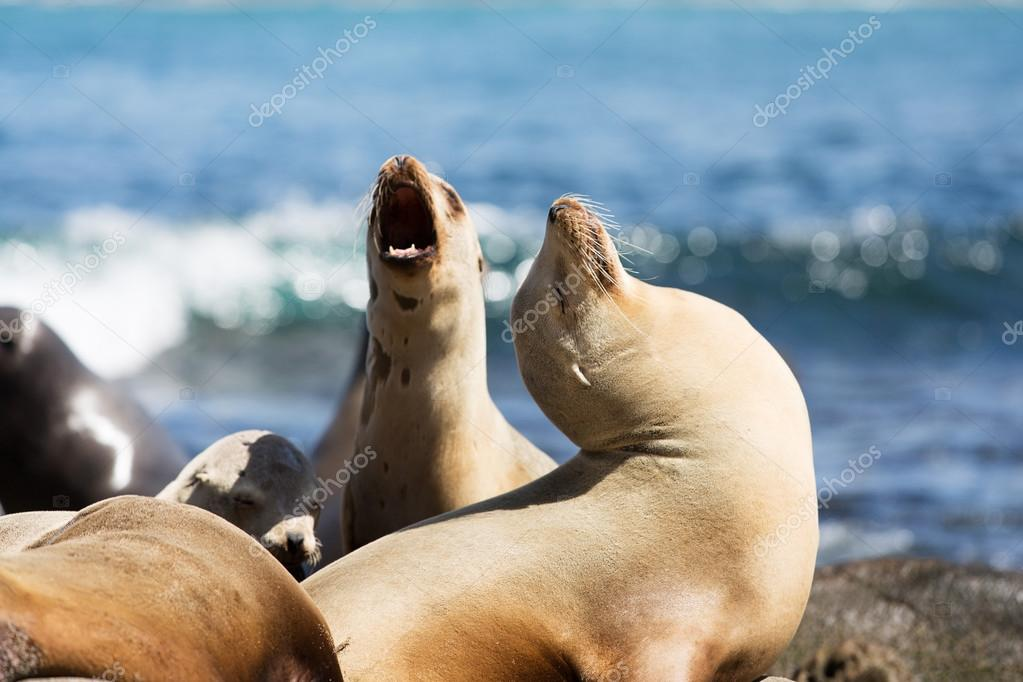 sea lions at the rocks