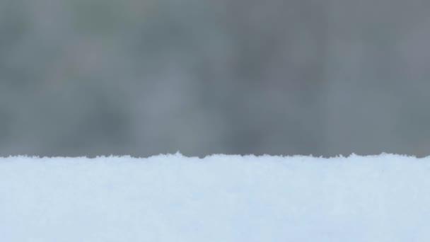 Silné sněžení, zimní bouře v lesích, Sibiř.