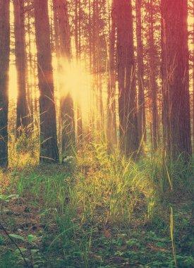 """Картина, постер, плакат, фотообои """"красивый закат в лесу постеры картины фото черно-белые"""", артикул 63918827"""