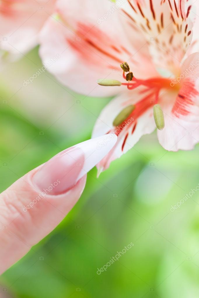 Dedos con manicura hermosa toca una flor — Foto de stock ...