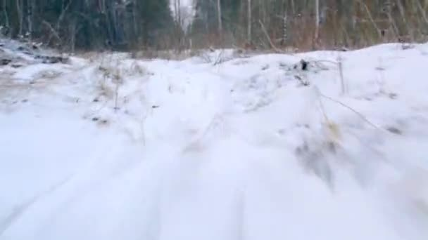 Vision of animal in winter forest