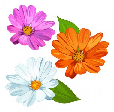 several daisy flowers