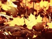 podzimní listí v lese
