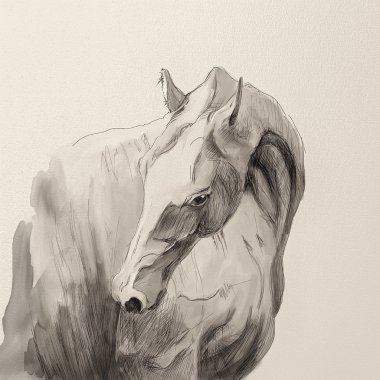 Drawing portrait of akhal-teke horse