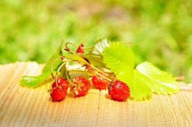 woodland Alpine strawberries