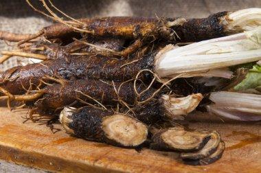 Fresh burdock roots.