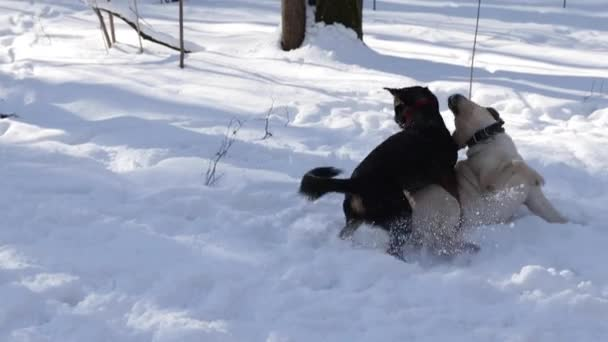Two Dogs in the Winter Forest
