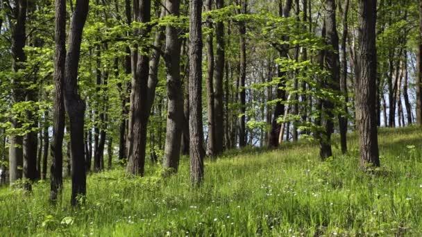 Jarní Les v slunečný den