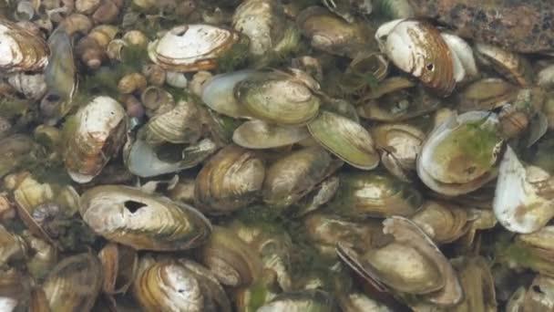 Muschelschalen unter Wasser als Hintergrund