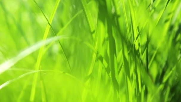 jarní tráva s sluneční paprsky hd