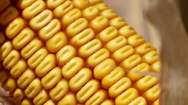 Zrna zralého kukuřice