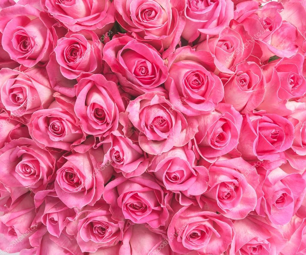 hintergrundbild von rosa rosen stockfoto gilmanshin 84480392. Black Bedroom Furniture Sets. Home Design Ideas