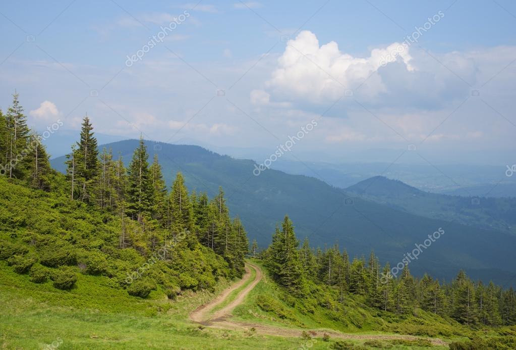 The road through the wood, Carpathians