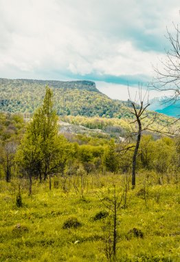 Spring in the mountains