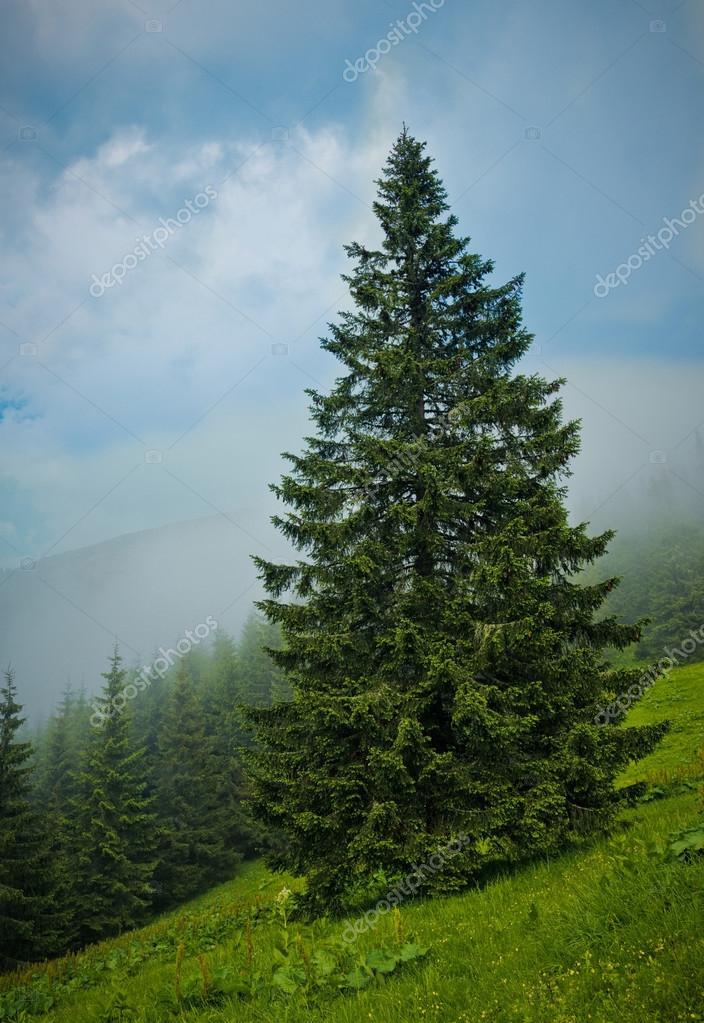Summer landscape, Ukraine