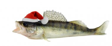Santa hat in Walleye