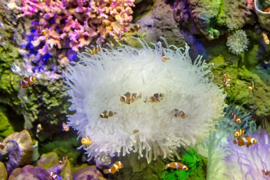fishes in coral fauna