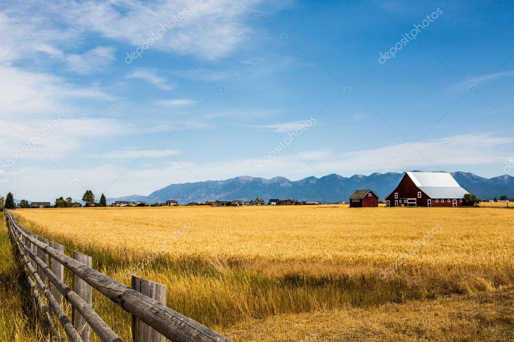 Campo di grano con una casa colonica foto stock for Piani di una casa colonica