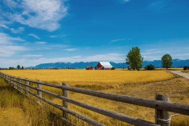 Wheat field with a farmhouse