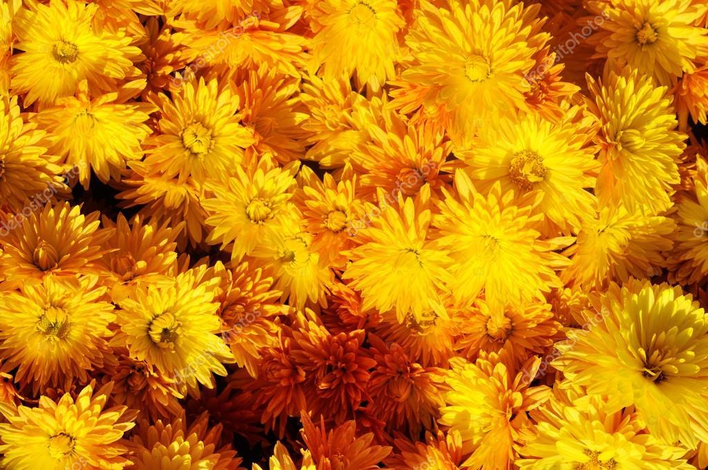 a flower background