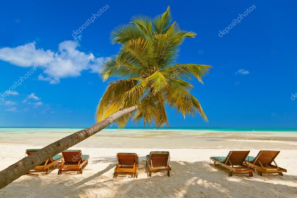 Lit De Bronzage Sur La Plage Maldives Photographie Violin C 105301620