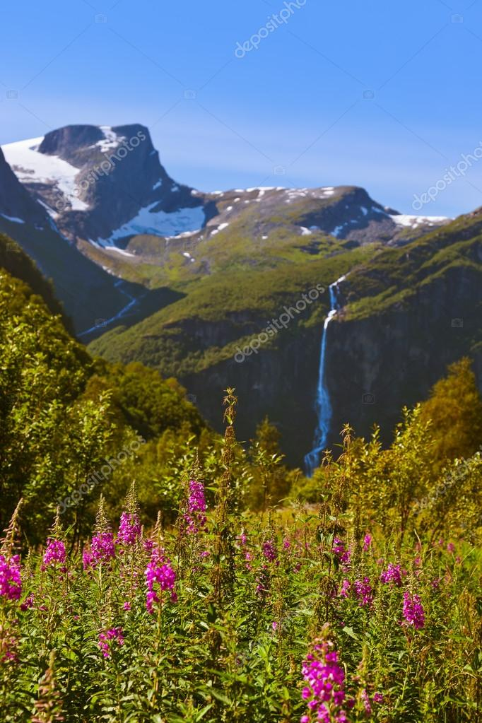 Meadow near Briksdal glacier - Norway