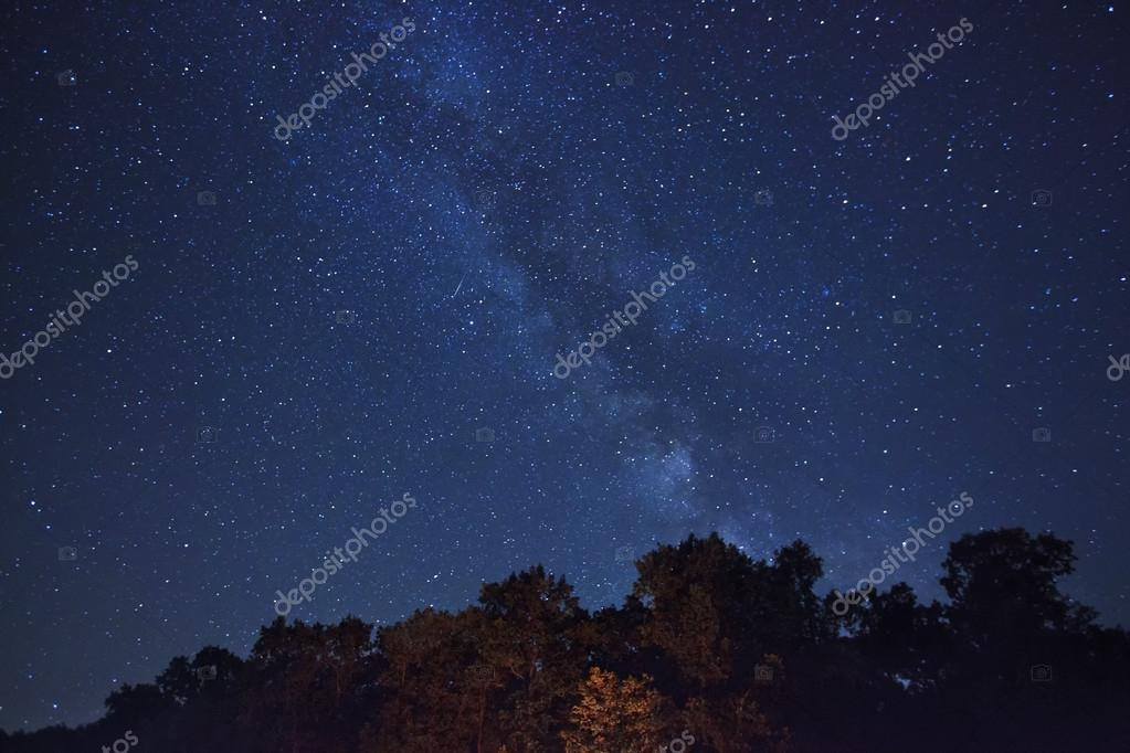 Beautiful night sky and forest