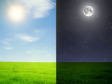 Field Green field in day and night