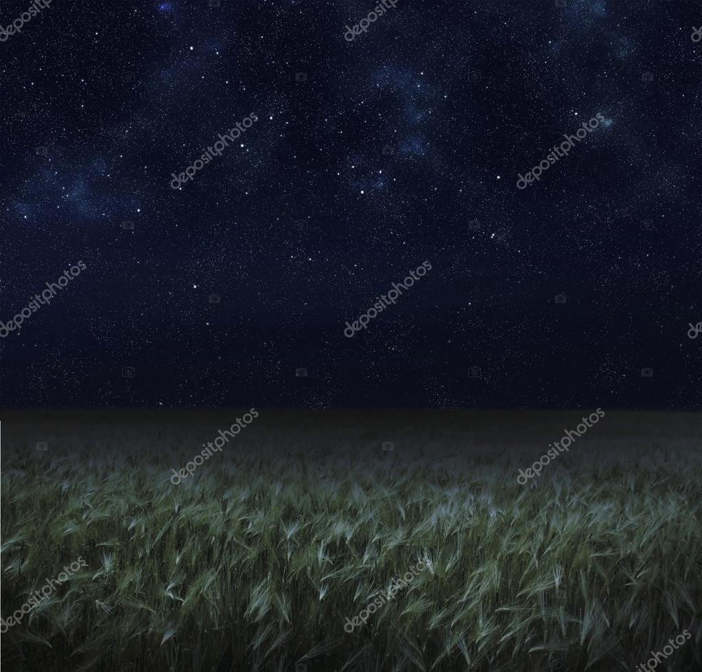 night spring field