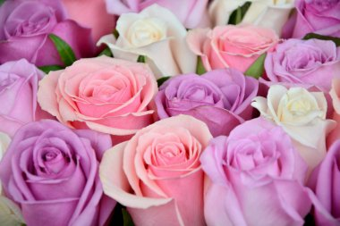 Pink and white roses background