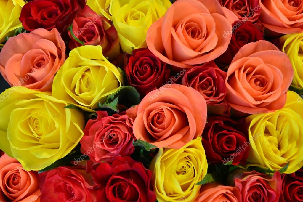 Colorful roses background, shallow depth of field