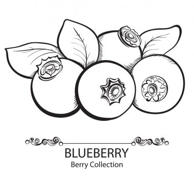 Stylized hand drawn black and white illustration of blueberry
