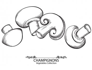 Mushrooms Champignon. Vector hand drawn vegetables isolated on white background