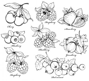 Collection of hand drawn berries isolated on white background. Strawberry, Cherry, Raspberry, Gooseberry, Blackberry, Red currant and Blueberry