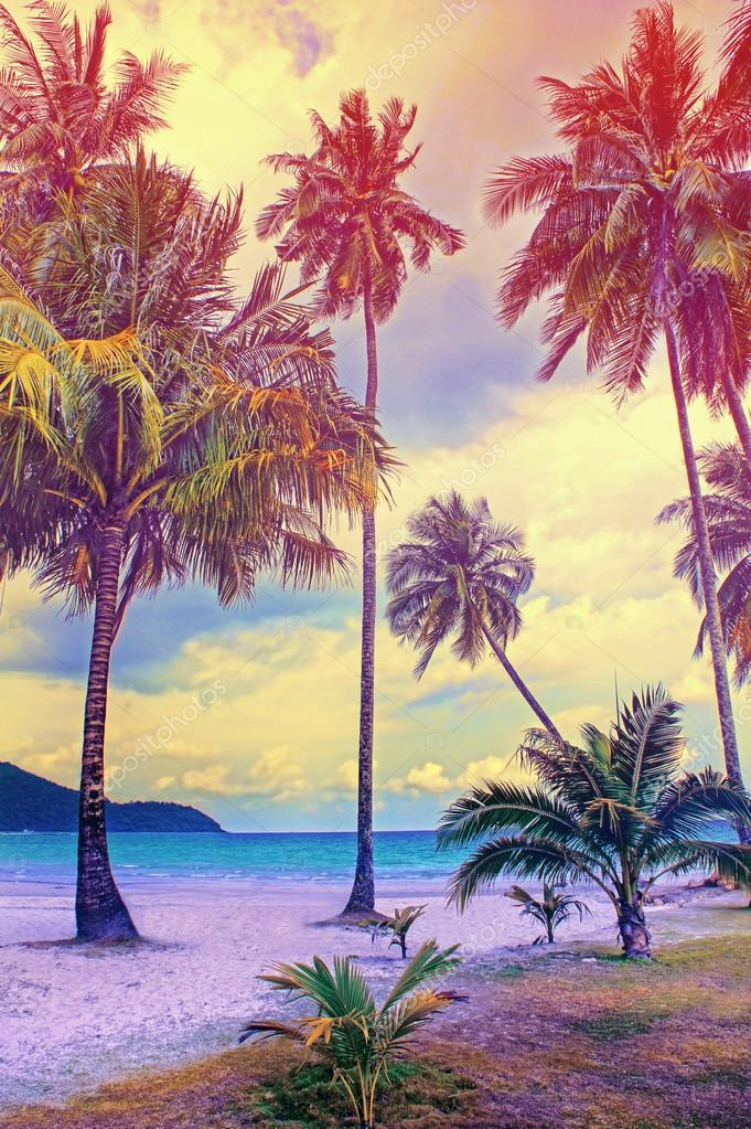 Paradise nature, palm tree on the tropical beach. Summer travel