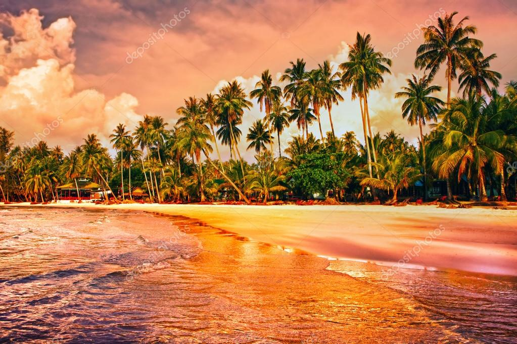 Beautiful tropical beach with palm trees at sunset