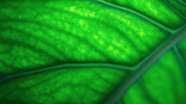 Green leaf filmed in close up